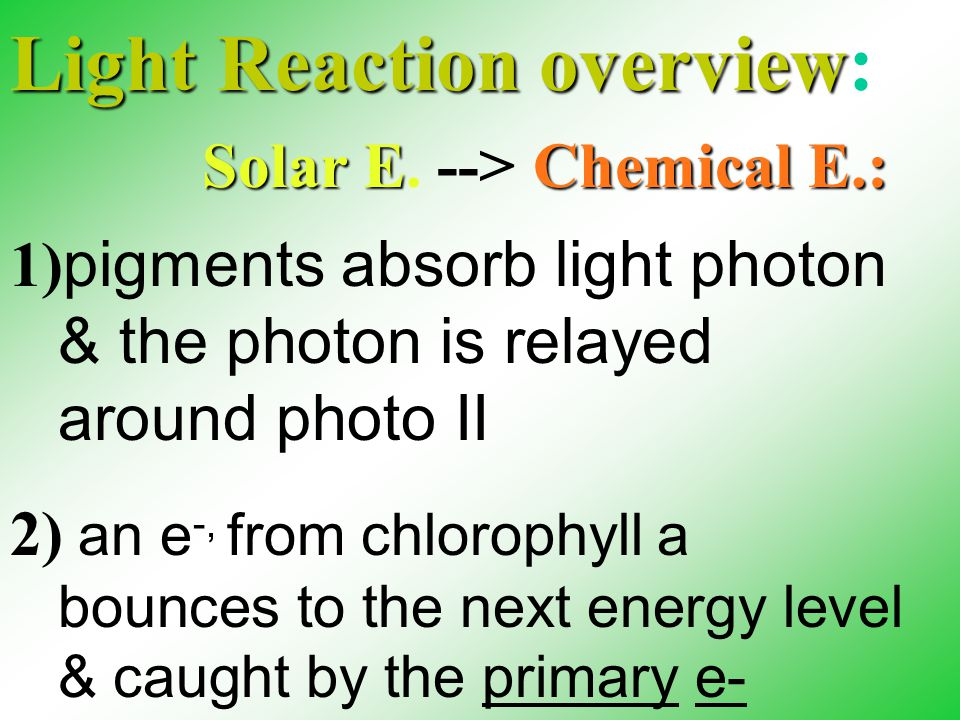 Light Reaction overview Light Reaction overview: 1) pigments absorb light photon & the photon is relayed around photo II 2) an e -, from chlorophyll a