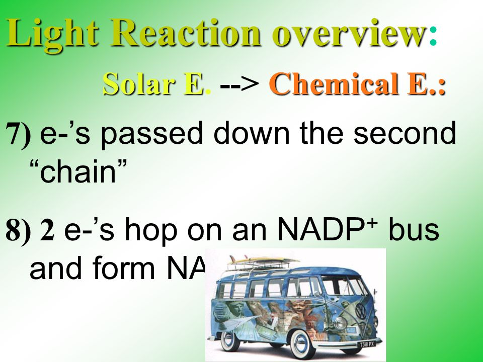 Light Reaction overview Light Reaction overview: 7) e-'s passed down the second chain 8) 2 e-'s hop on an NADP + bus and form NADPH Solar EE.