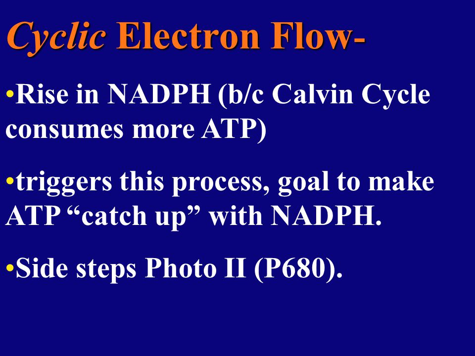 Cyclic Electron Flow - Rise in NADPH (b/c Calvin Cycle consumes more ATP) triggers this process, goal to make ATP catch up with NADPH.