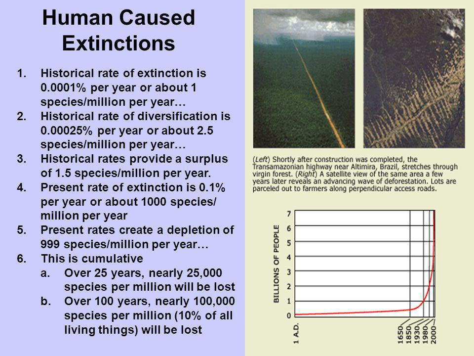 Human Caused Extinctions 1.Historical rate of extinction is 0.0001% per year or about 1 species/million per year… 2.Historical rate of diversification
