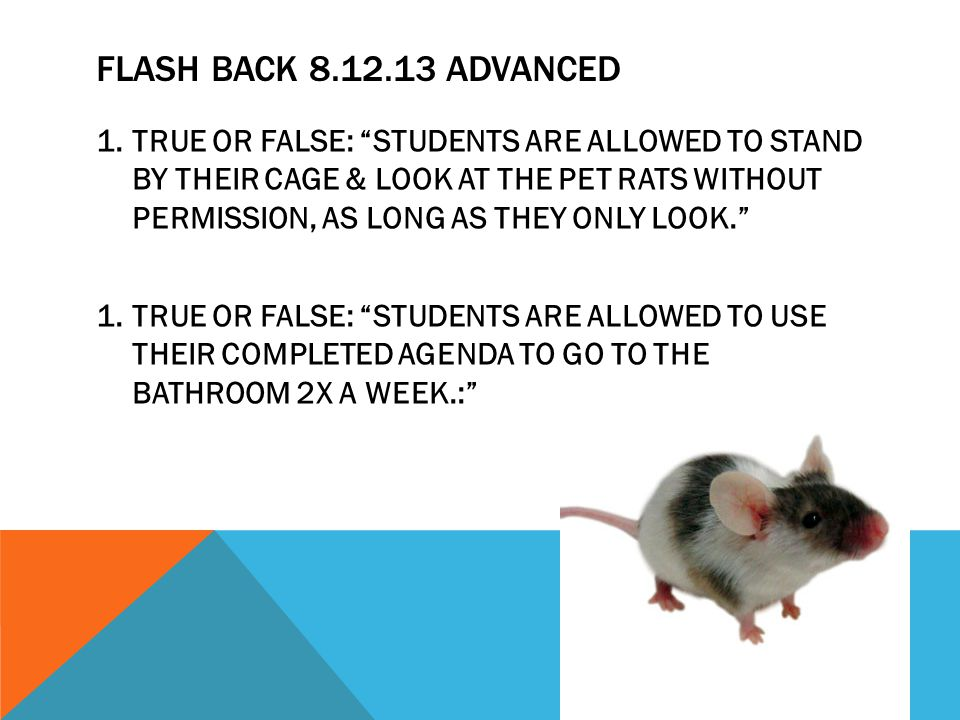 FLASH BACK 8.12.13 ADVANCED 1.TRUE OR FALSE: STUDENTS ARE ALLOWED TO STAND BY THEIR CAGE & LOOK AT THE PET RATS WITHOUT PERMISSION, AS LONG AS THEY ONLY LOOK. 1.TRUE OR FALSE: STUDENTS ARE ALLOWED TO USE THEIR COMPLETED AGENDA TO GO TO THE BATHROOM 2X A WEEK.: