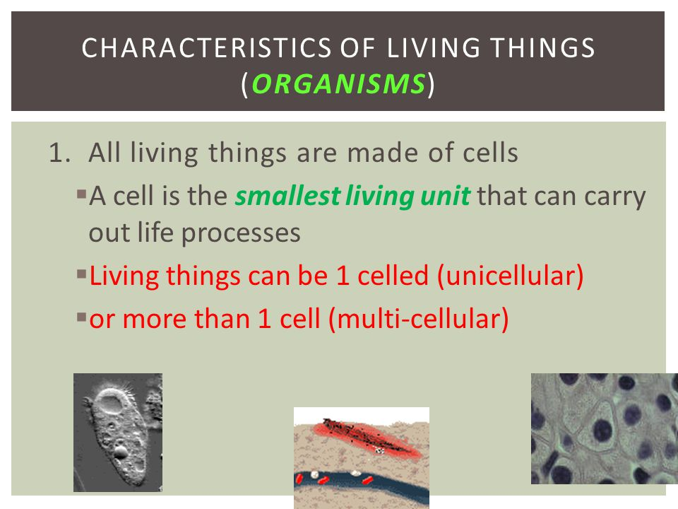 1. All living things are made of cells  A cell is the smallest living unit that can carry out life processes  Living things can be 1 celled (unicell