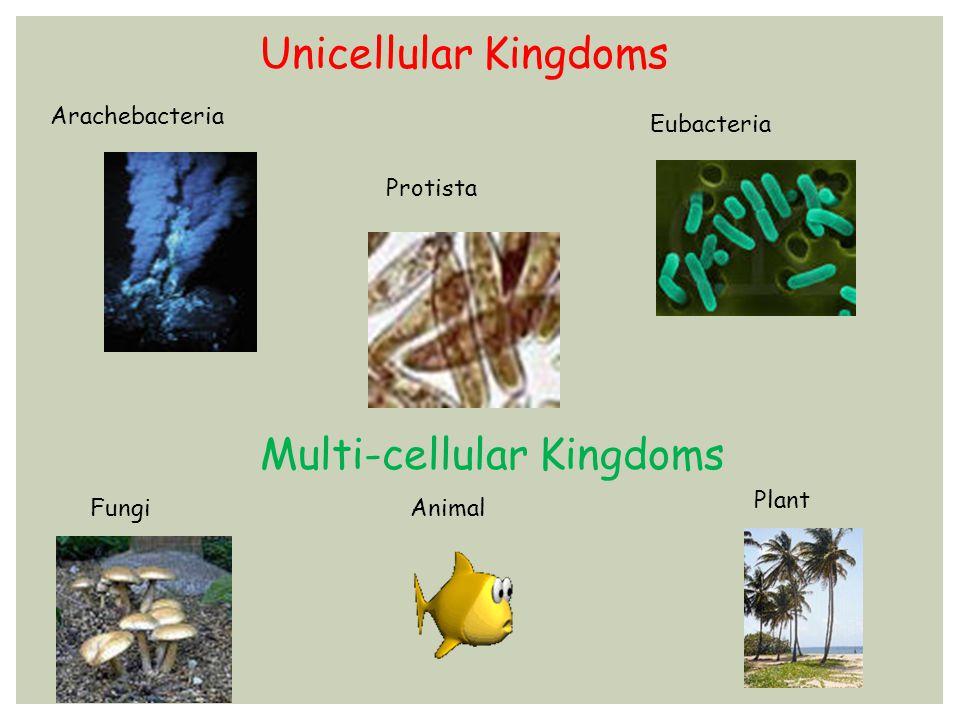 Unicellular Kingdoms Arachebacteria Eubacteria Protista Multi-cellular Kingdoms Fungi Plant Animal
