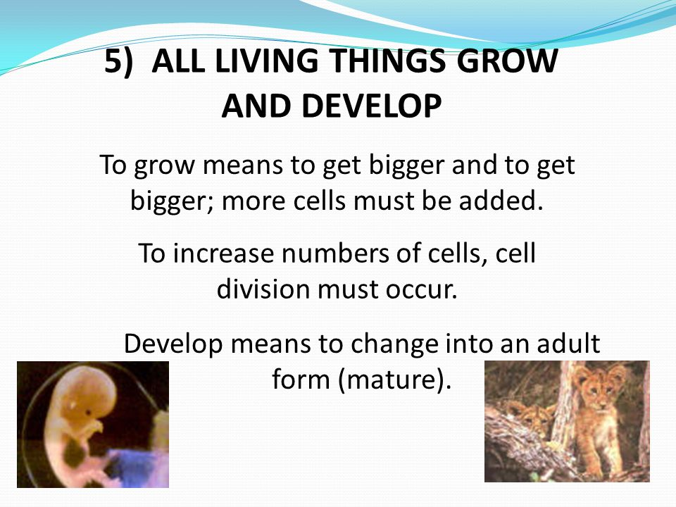 5) ALL LIVING THINGS GROW AND DEVELOP To grow means to get bigger and to get bigger; more cells must be added. To increase numbers of cells, cell divi
