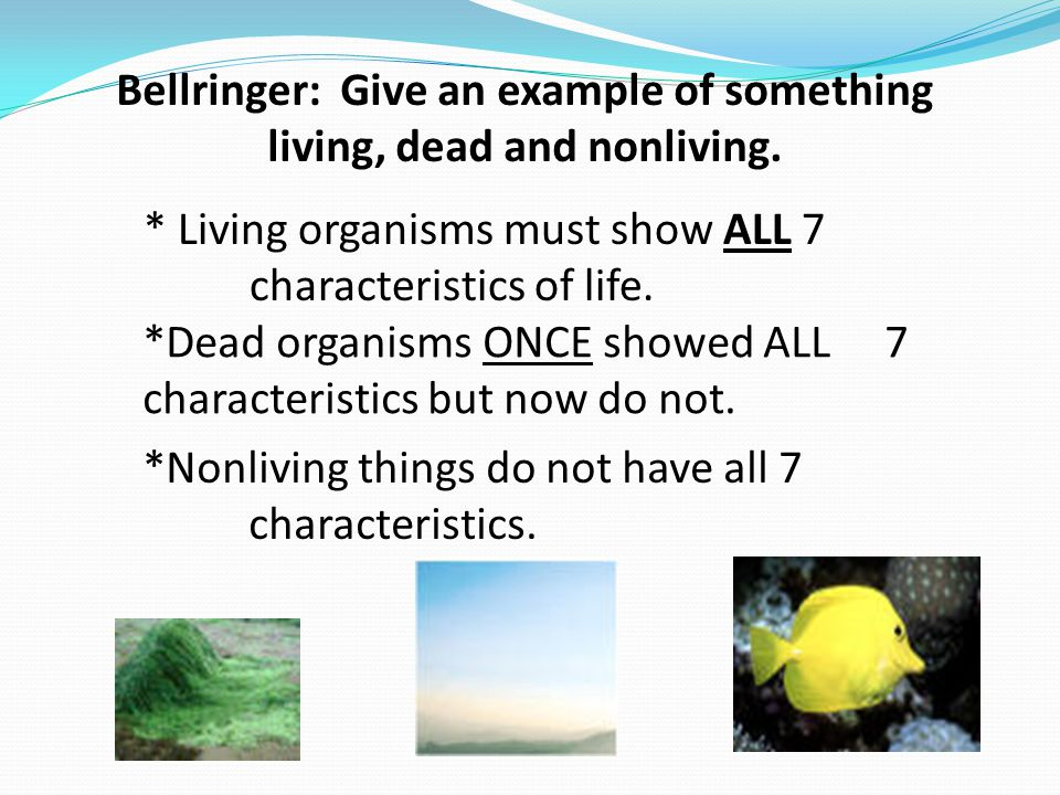 Bellringer: Give an example of something living, dead and nonliving. * Living organisms must show ALL 7 characteristics of life. *Nonliving things do