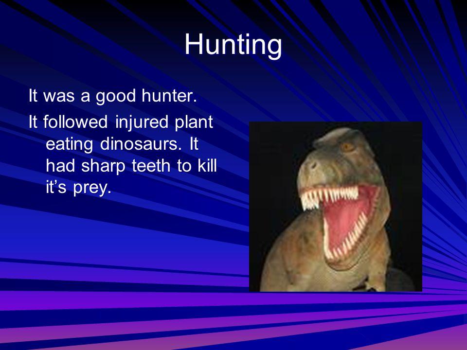 Hunting It was a good hunter. It followed injured plant eating dinosaurs. It had sharp teeth to kill it's prey.