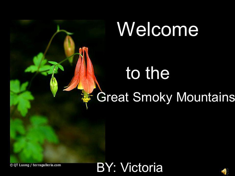 Welcome to the Great Smoky Mountains BY: Victoria