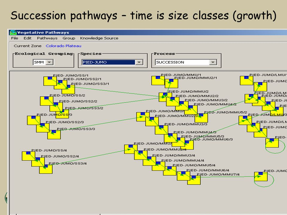 Succession pathways – time is size classes (growth)