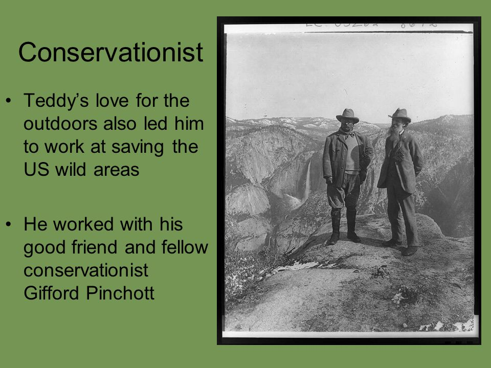 Conservationist Teddy's love for the outdoors also led him to work at saving the US wild areas He worked with his good friend and fellow conservationist Gifford Pinchott