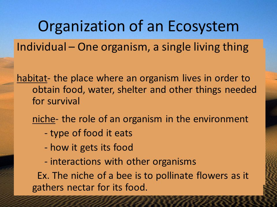 Organization of an Ecosystem Individual – One organism, a single living thing habitat- the place where an organism lives in order to obtain food, wate