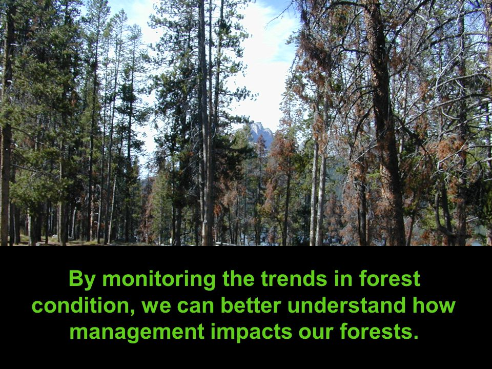 By monitoring the trends in forest condition, we can better understand how management impacts our forests.