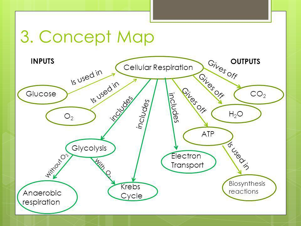 3. Concept Map Cellular Respiration Is used in Glucose O2O2 Glycolysis CO 2 H2OH2O ATP Is used in Biosynthesis reactions Gives off Is used in Gives of