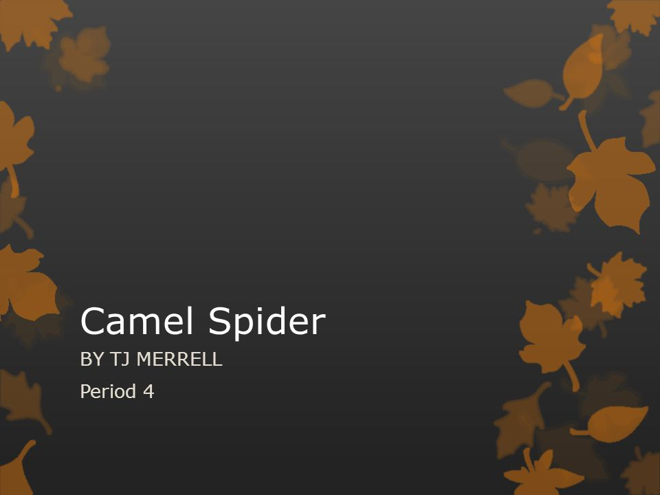 Camel Spider BY TJ MERRELL Period 4