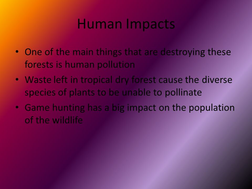 Human Impacts One of the main things that are destroying these forests is human pollution Waste left in tropical dry forest cause the diverse species of plants to be unable to pollinate Game hunting has a big impact on the population of the wildlife