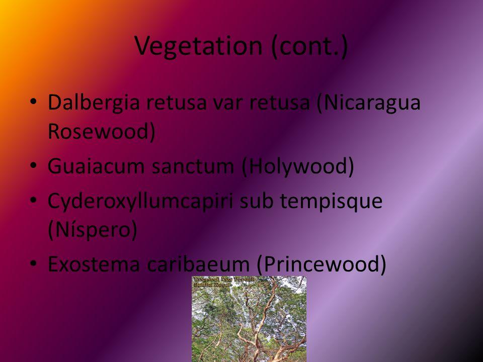 Vegetation (cont.) Dalbergia retusa var retusa (Nicaragua Rosewood) Guaiacum sanctum (Holywood) Cyderoxyllumcapiri sub tempisque (Níspero) Exostema caribaeum (Princewood)