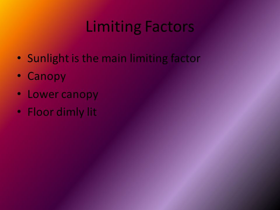 Limiting Factors Sunlight is the main limiting factor Canopy Lower canopy Floor dimly lit