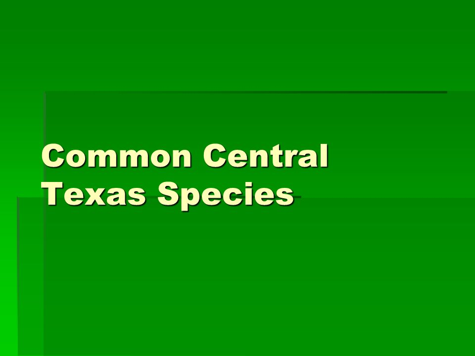 Common Central Texas Species