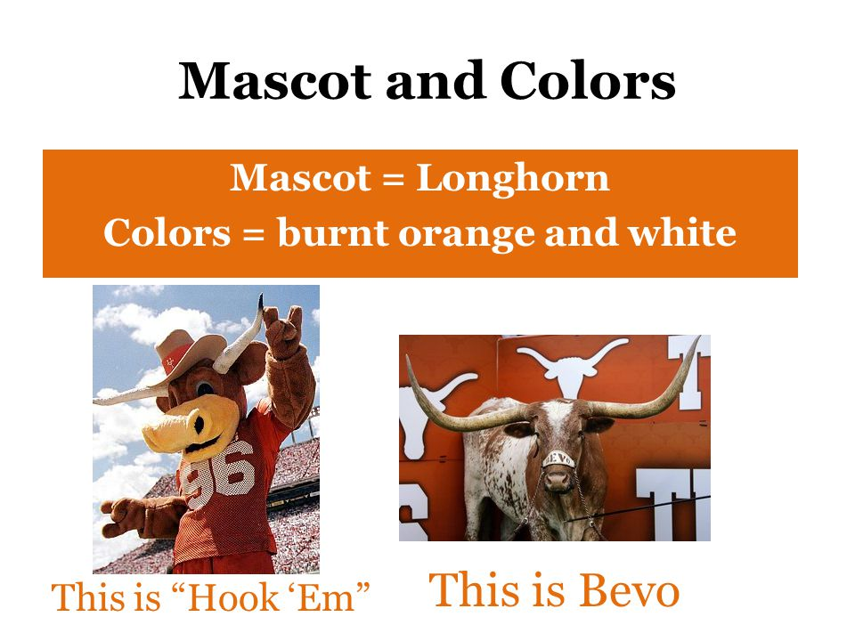 "Mascot and Colors Mascot = Longhorn Colors = burnt orange and white This is ""Hook 'Em"" This is Bevo"