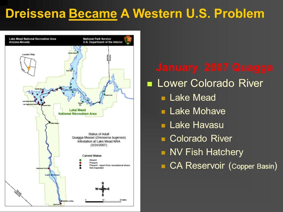 Dreissena Became A Western U.S.