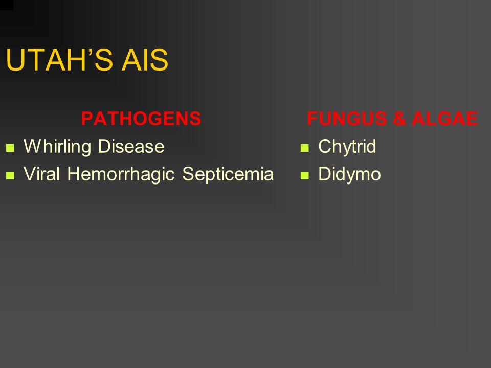 UTAH'S AIS PATHOGENS Whirling Disease Viral Hemorrhagic Septicemia FUNGUS & ALGAE Chytrid Didymo