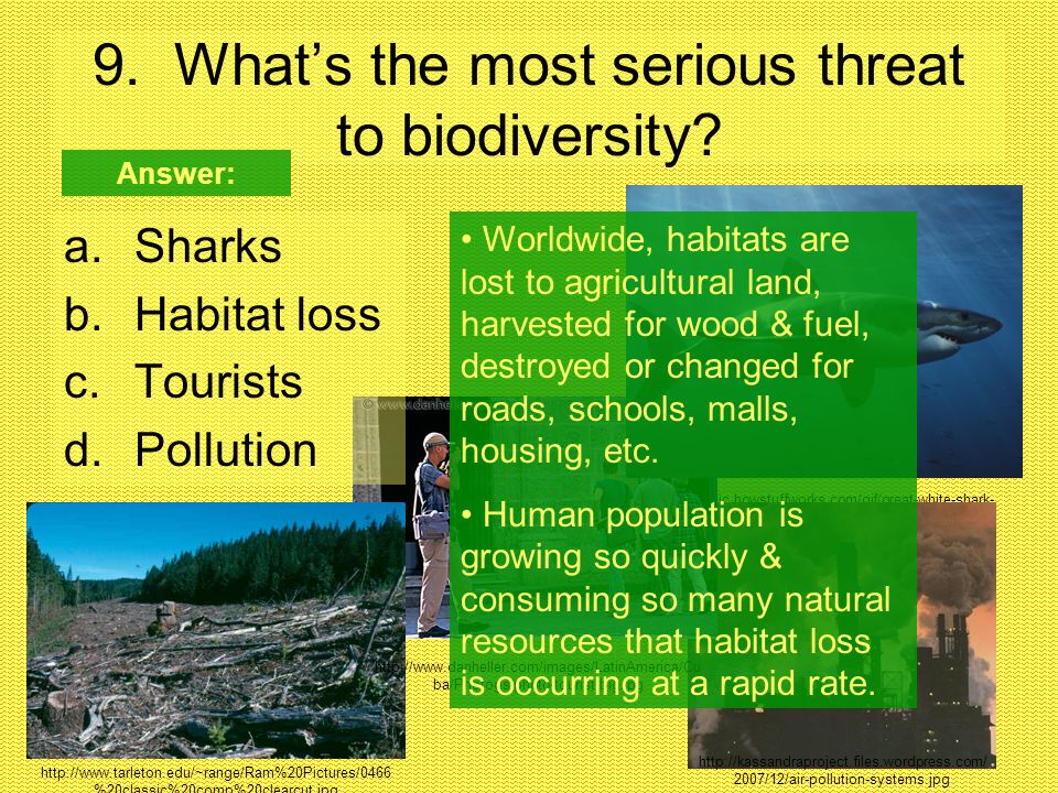 http://static.howstuffworks.com/gif/great-white-shark- 1.jpg 9. What's the most serious threat to biodiversity? a.Sharks b.Habitat loss c.Tourists d.P