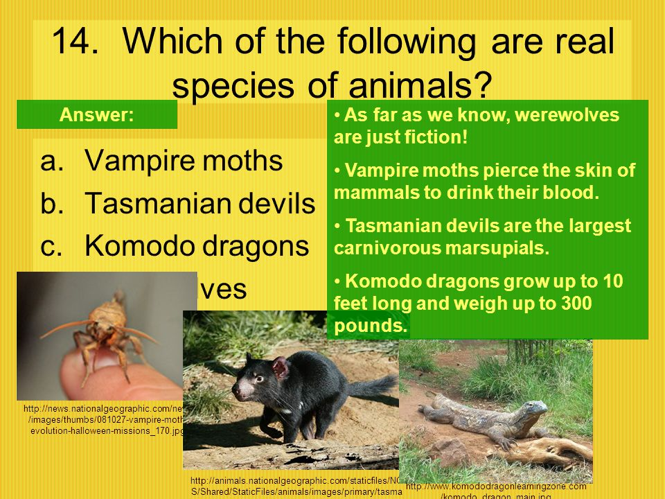 14. Which of the following are real species of animals? a.Vampire moths b.Tasmanian devils c.Komodo dragons d.Werewolves http://news.nationalgeographi