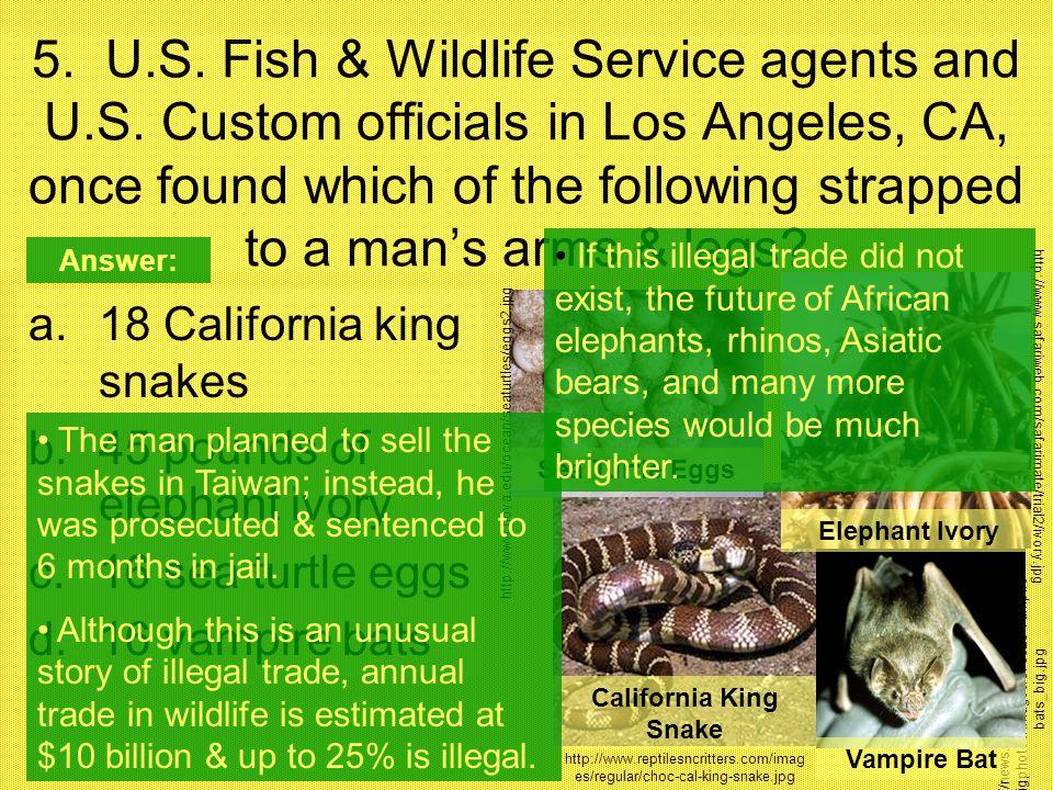 http://news.nationalgeographic.com/news /bigphotos/images/070820-vampire- bats_big.jpg 5. U.S. Fish & Wildlife Service agents and U.S. Custom official