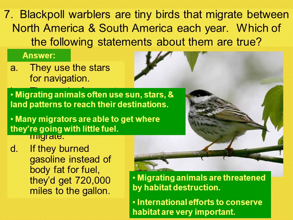 7. Blackpoll warblers are tiny birds that migrate between North America & South America each year. Which of the following statements about them are tr