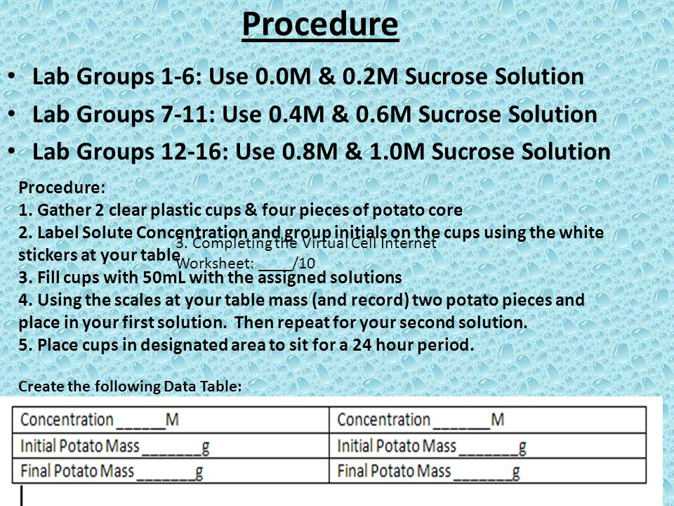 Procedure Lab Groups 1-6: Use 0.0M & 0.2M Sucrose Solution Lab Groups 7-11: Use 0.4M & 0.6M Sucrose Solution Lab Groups 12-16: Use 0.8M & 1.0M Sucrose Solution Procedure: 1.