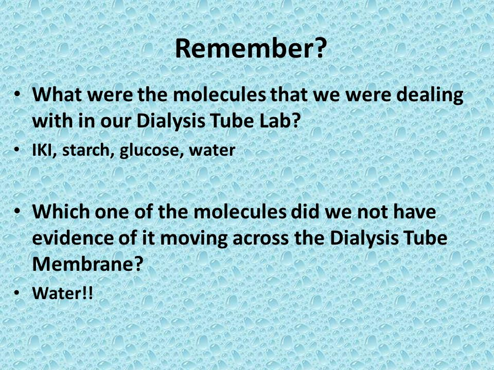 Remember? What were the molecules that we were dealing with in our Dialysis Tube Lab? IKI, starch, glucose, water Which one of the molecules did we no
