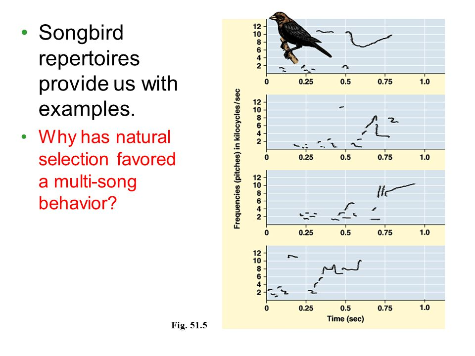 Songbird repertoires provide us with examples. Why has natural selection favored a multi-song behavior? Fig. 51.5