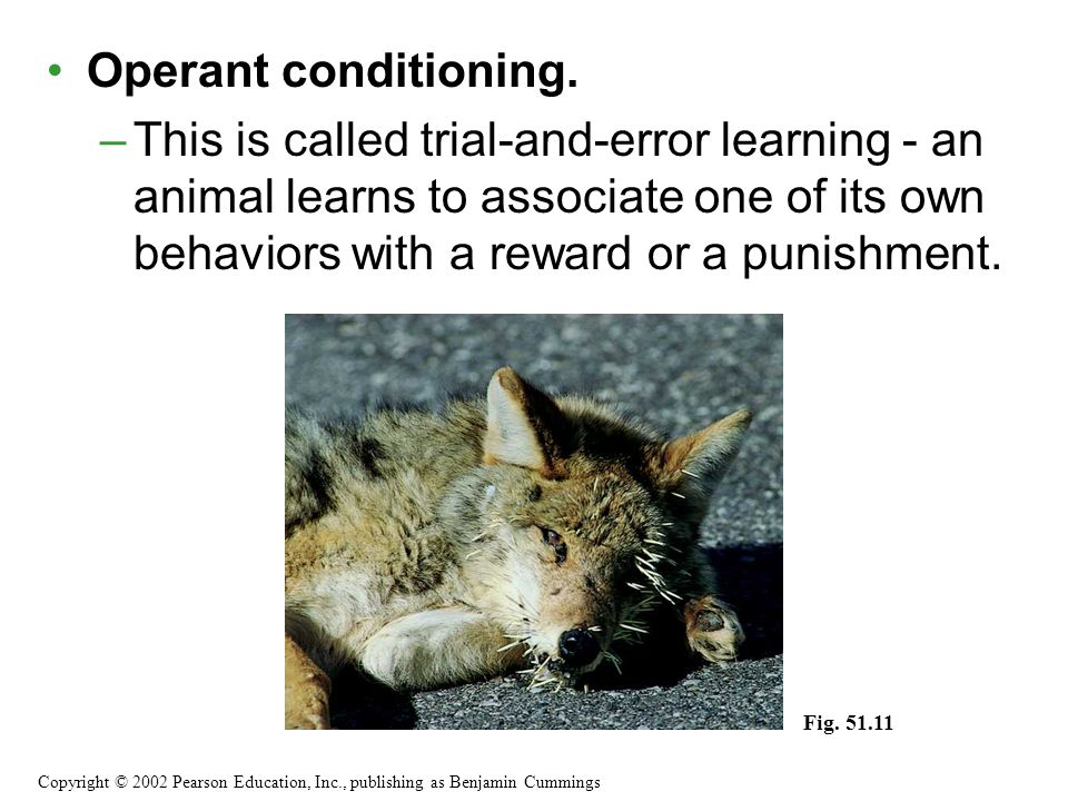 Operant conditioning. –This is called trial-and-error learning - an animal learns to associate one of its own behaviors with a reward or a punishment.