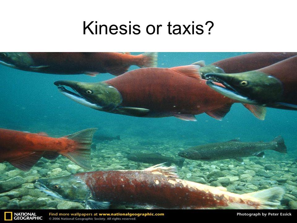 Kinesis or taxis?