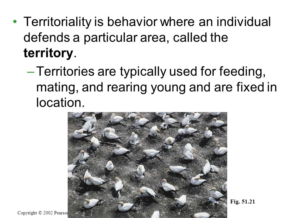 Territoriality is behavior where an individual defends a particular area, called the territory. –Territories are typically used for feeding, mating, a
