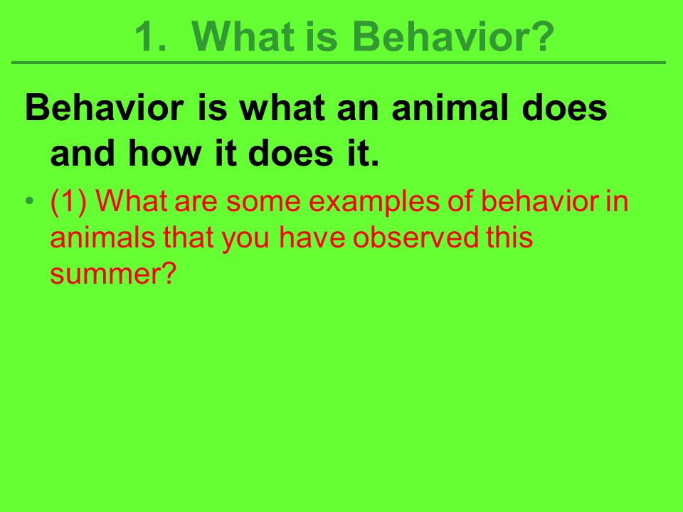 Behavior is what an animal does and how it does it. (1) What are some examples of behavior in animals that you have observed this summer? 1. What is B