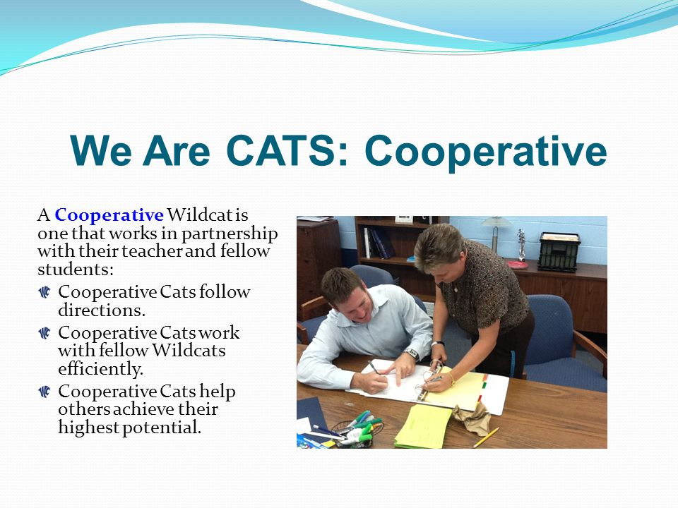 We Are CATS: Cooperative A Cooperative Wildcat is one that works in partnership with their teacher and fellow students: Cooperative Cats follow directions.
