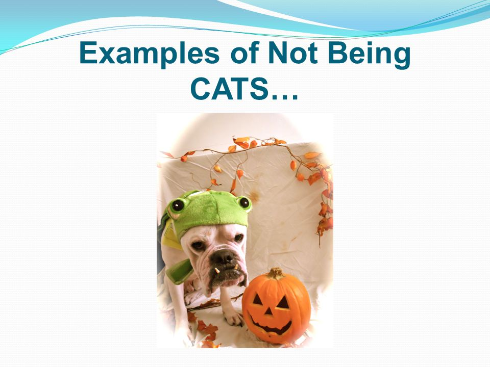 Examples of Not Being CATS…