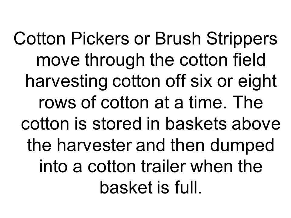 The cotton is transferred from the cotton trailers to a module builder.