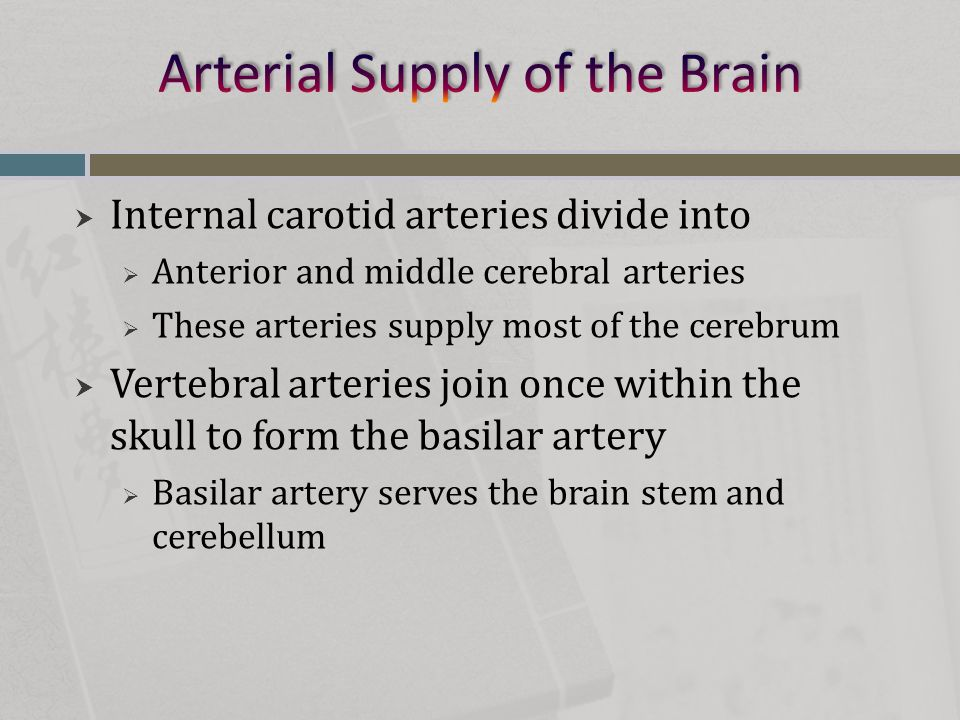  Internal carotid arteries divide into  Anterior and middle cerebral arteries  These arteries supply most of the cerebrum  Vertebral arteries join