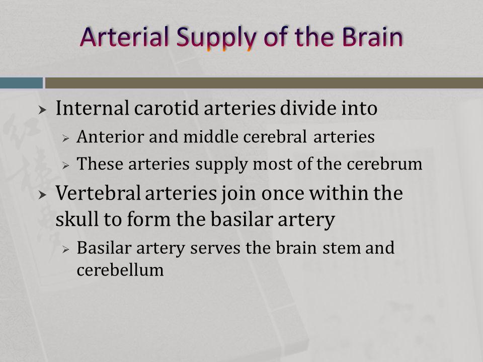  Major vessels of hepatic portal circulation  Inferior and superior mesenteric veins  Splenic vein  Left gastric vein
