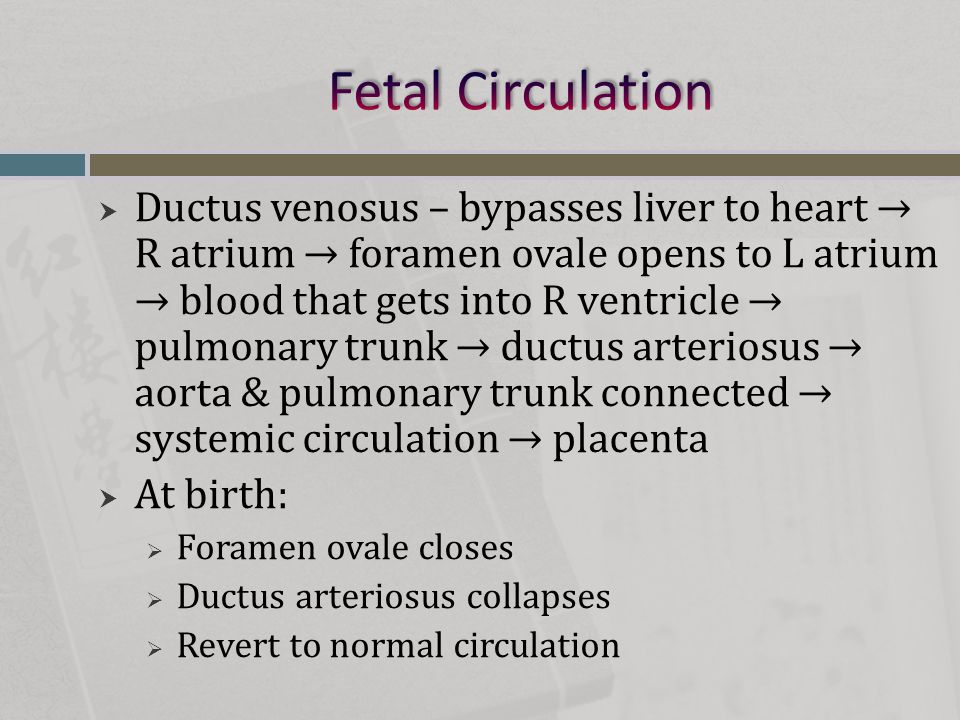  Ductus venosus – bypasses liver to heart → R atrium → foramen ovale opens to L atrium → blood that gets into R ventricle → pulmonary trunk → ductus