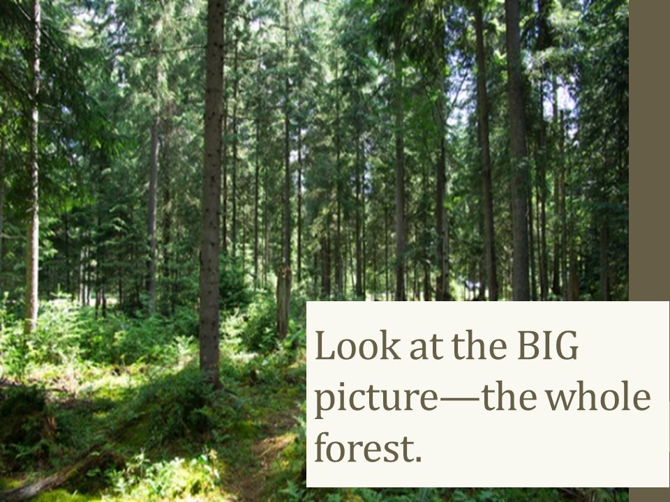 Look at the BIG picture—the whole forest.