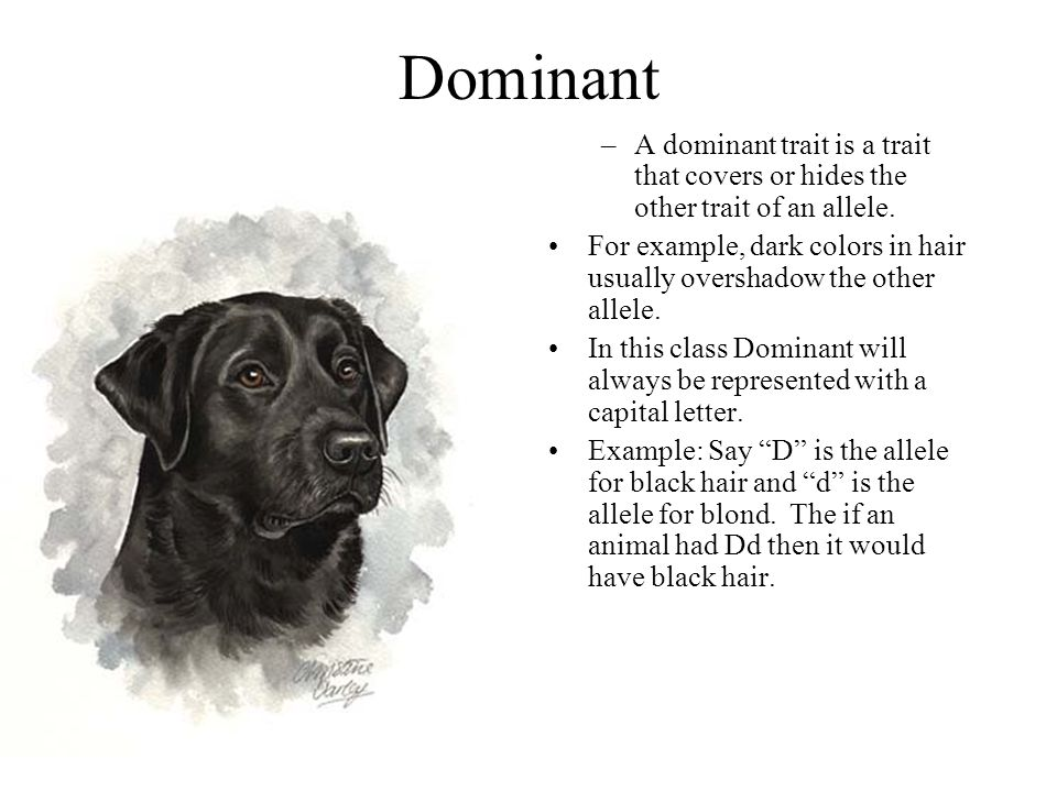 Dominant –A dominant trait is a trait that covers or hides the other trait of an allele.