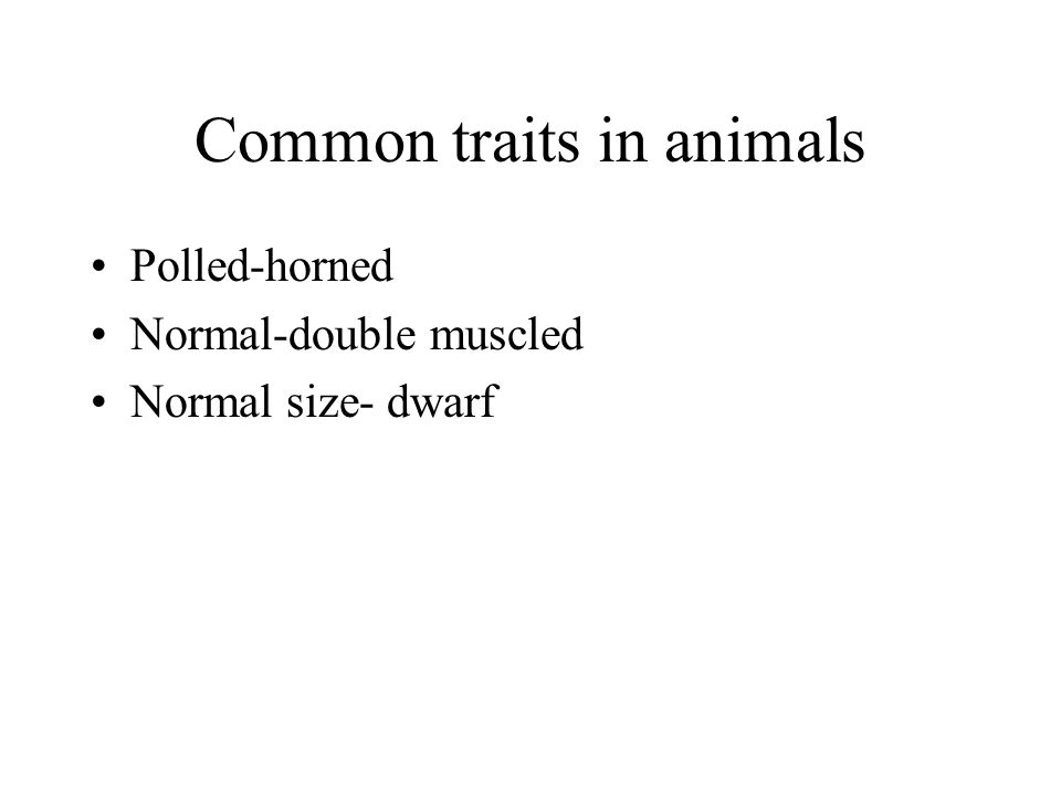 Common traits in animals Polled-horned Normal-double muscled Normal size- dwarf