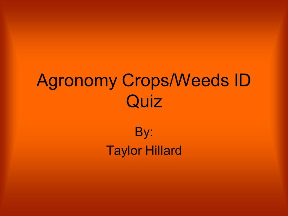 Agronomy Crops/Weeds ID Quiz By: Taylor Hillard
