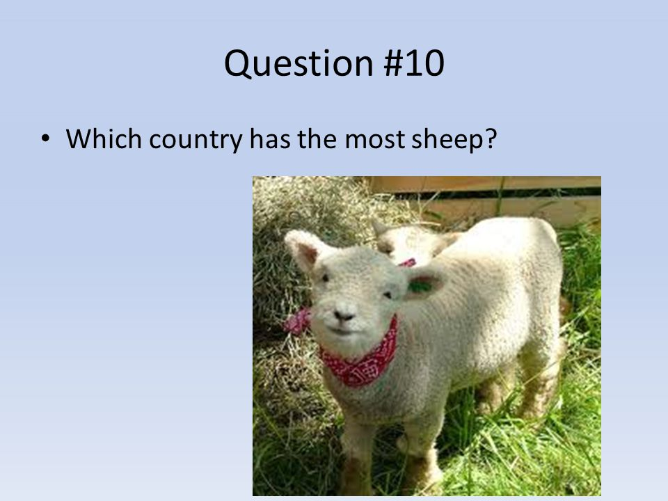 Question #10 Which country has the most sheep?