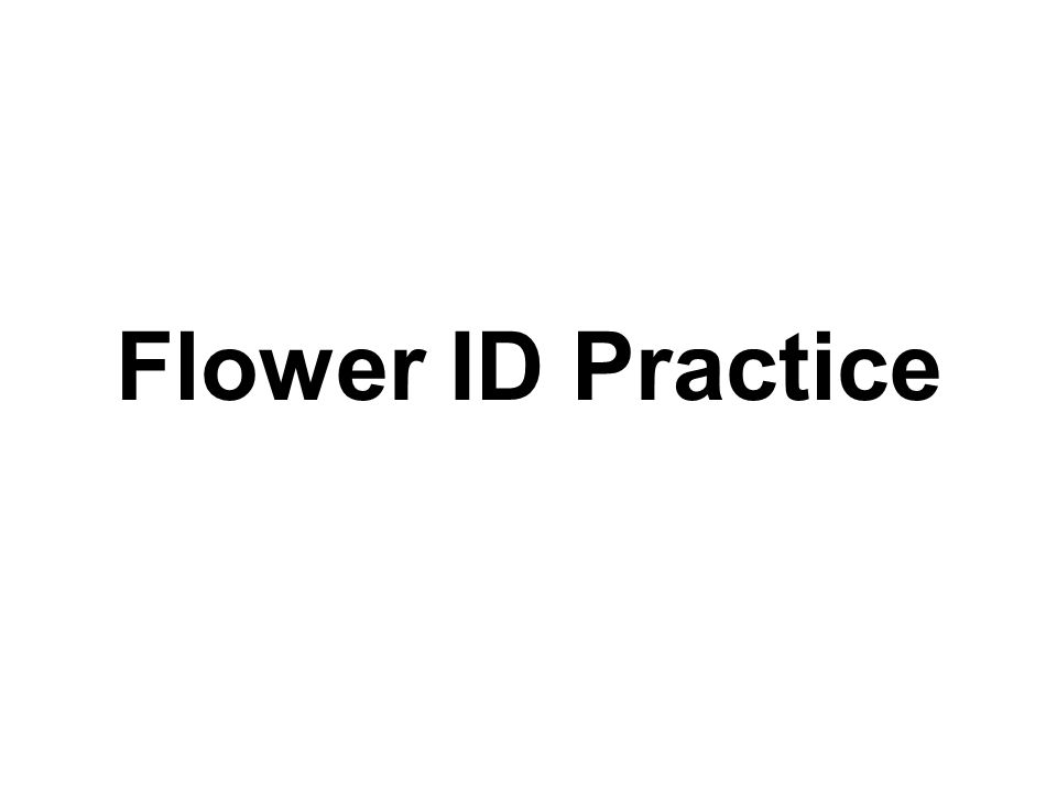 Flower ID Practice