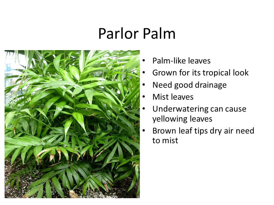 7. Snapdragon Scientific Name – Antirrhinum majus Perennial treated as an annual bedding plant