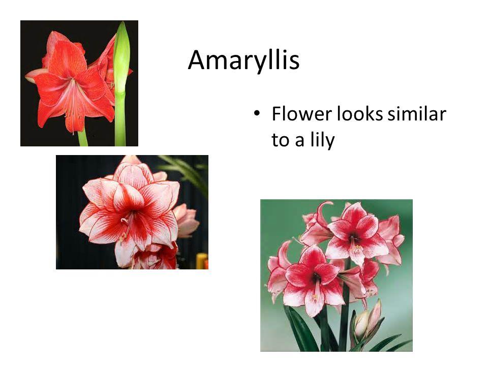 8. Peony Botanical name: – Paeonia sp. Grows 3-5 feet 1 leaf cut to 3 Purplish red in stems