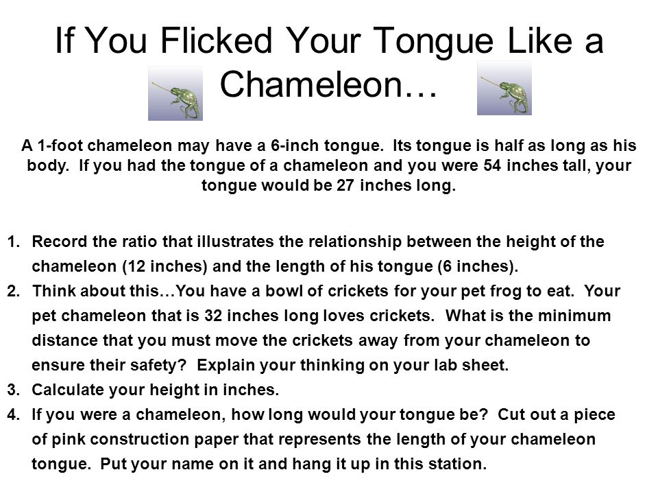 If You Flicked Your Tongue Like a Chameleon… A 1-foot chameleon may have a 6-inch tongue. Its tongue is half as long as his body. If you had the tongu